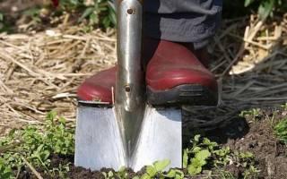 Какая лопата лучше для копания огорода