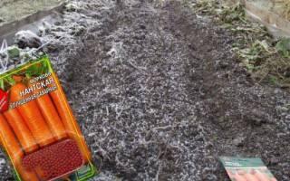 Посев моркови осенью