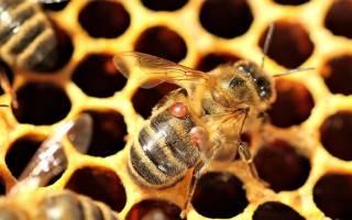 Когда обрабатывать пчел бипином осенью