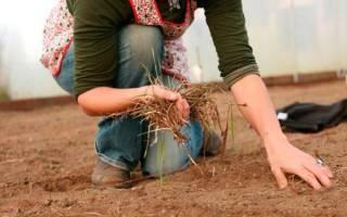 Чем обработать землю в парнике осенью