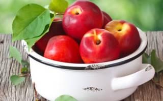 С чем скрестили персик чтобы получить нектарин