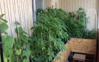 Огород на балконе для начинающих