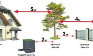 Расстояние между деревьями при посадке сада таблица