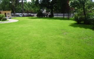Когда сажать газонную траву весной или осенью