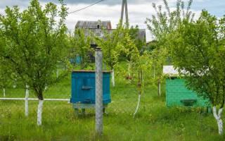 Что нужно начинающему пчеловоду с нуля