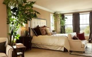 Какие комнатные растения можно держать в спальне