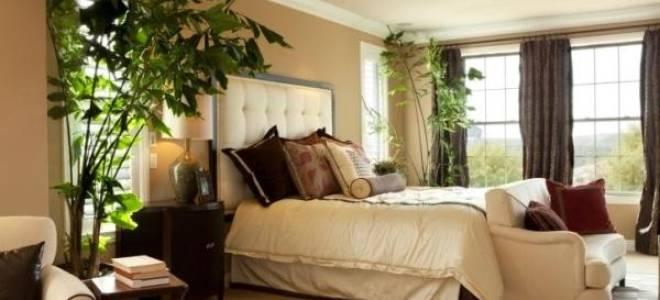 Какие комнатные цветы можно держать в спальне