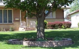 Какие деревья лучше сажать перед домом