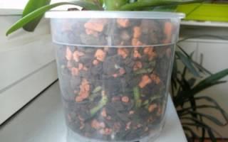 «Серамис» для орхидей: как его использовать?