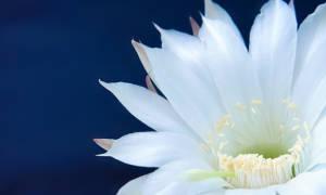 Розовые орхидеи: сорта и их описание