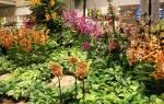 Орхидея садовая посадка и уход