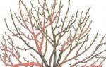 Обрезка кустов смородины и крыжовника осенью
