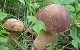 Как развести грибы на даче