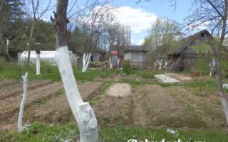 Садовая побелка для деревьев инструкция