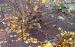 Чем удобрять крыжовник осенью