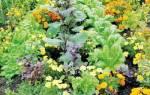 Совместимость овощей на огороде таблица