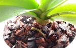 Как подготовить сосновую кору для посадки орхидеи