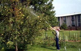 Обработка яблонь ранней весной