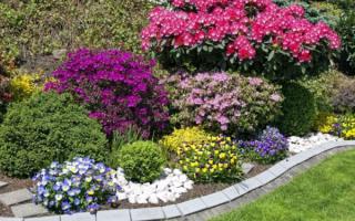 Цветы многолетники для дачи красивоцветущие