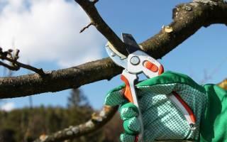 Когда лучше производить обрезку плодовых деревьев