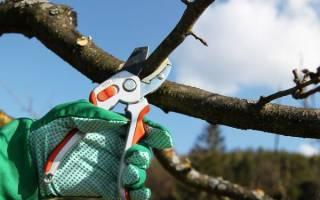 Когда производить обрезку плодовых деревьев осенью