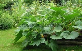 Тенелюбивые овощные культуры для огорода