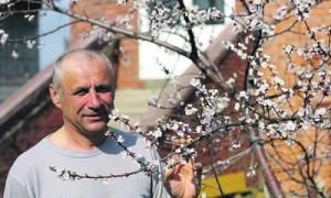 Посадка косточковых деревьев осенью