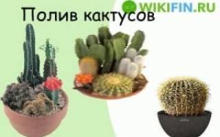 Что такое кактус?