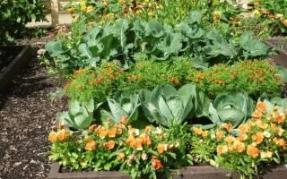 Соседство растений на огороде