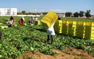 Урожайность салата в теплицах с м2