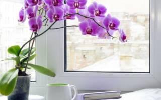 Сколько цветет орхидея и как продлить ее цветение?