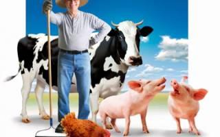 Фермерство в России с чего начать