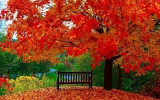 Листья какого дерева желтеют самыми первыми