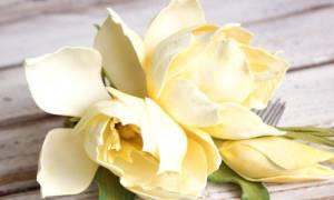 Олеандра цветок можно держать в доме