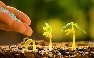 Как удобрить огород без навоза