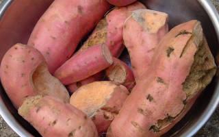 Методы борьбы с проволочником на огороде