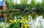 Как вырастить рыбу на приусадебном участке