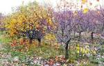 Предзимний полив плодовых деревьев