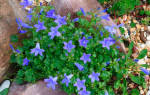 Низкорослые комнатные растения до 20 см