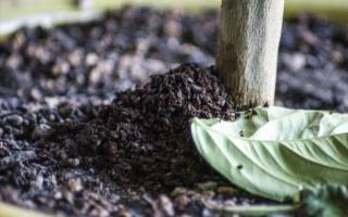 Кофе как удобрение для огорода