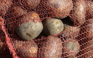 Что выделяет картофель при гниении