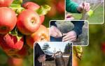 Можно ли прививать деревья осенью