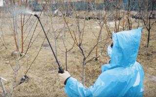 Как развести бордосскую жидкость для обработки деревьев