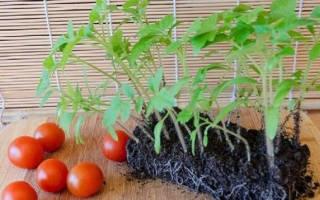 Как правильно посадить помидоры в открытый грунт