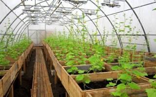 Как выращивать огурцы в теплице круглый год