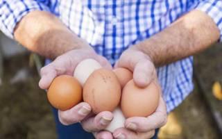 От чего зависит пол цыпленка при инкубации