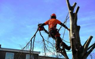 Кронирование и обрезка деревьев нормы