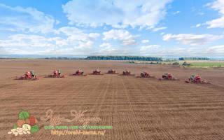Как вырастить пшеницу на огороде