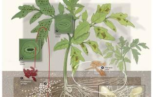 Как продезинфицировать землю для комнатных цветов