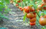 Что посадить после помидор на следующий год